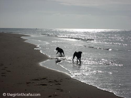 Long walks with the dogs on the beach (Exmouth)
