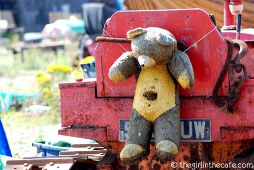 The saddest bear in the world