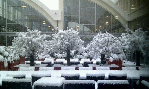 Winter in the office garden