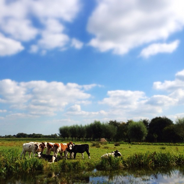 Very Dutch landscape.