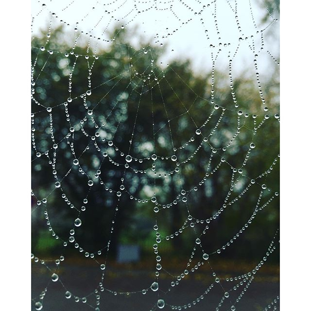 Spider-Man is having you for dinner tonight ? #cobweb #web #fall #spider #drops #waterdrops